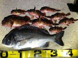 紀ノ川河口でフカセ釣り、午後にやっとのことで本命一枚