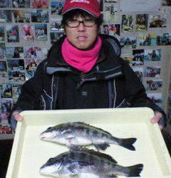 中波止でチヌ39~41センチの釣果、フカセ釣りで