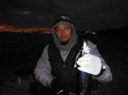 【今日も釣れてる?タチウオ】南芦屋浜