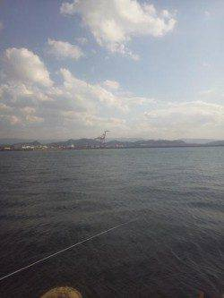 紀ノ川河口 ダンゴ釣りでチヌ40cm頭に2枚