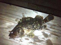 紀ノ川周辺ストラクチャー打ちでの根魚釣果