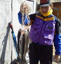 中波止・旧の一文字でのエビ撒き釣りの釣果。