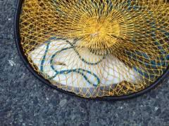 沖の一文字、投げ釣りでカレイ25〜30cm