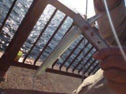 アジュールのサヨリ、今日も釣れてます!!