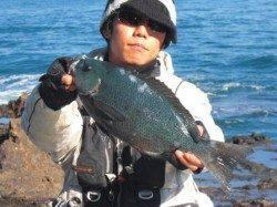 いよいよやってきた寒グレシーズン! 須江で磯釣り♪♪