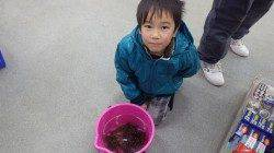 堺でのお子様の釣果、ガシラいっぱい釣りました♪
