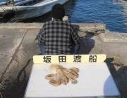 黒島の筏でデカいマダコがかかった!