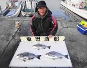 黒島の筏チヌ釣り、良型が出てます!