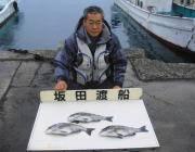 黒島の筏でチヌ3枚!