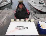23日黒島の筏釣果、ナイスサイズのチヌです!