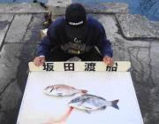 黒島の筏 納得サイズのチヌ&マダイ
