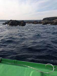 アシカでフカセ釣り、潮がいってるときにバタバタとグレゲット!