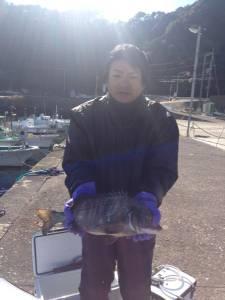 沖の長島で珍しくチヌが上がりました