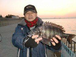 【釣れてます、エビ撒き】南芦屋浜リアルタイム