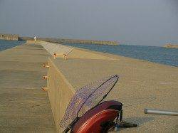 南塩谷 フカセ釣りでアジ〜23cm19匹 他ガシラも