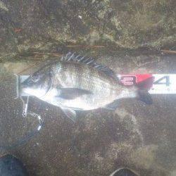 【雨の中でもチヌ釣れました!】南芦屋浜