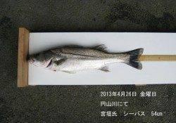 【26日】円山川にてシーバス!