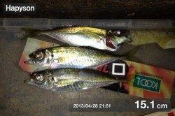 三本松鼻 のべ竿のウキ釣りでアジ〜14cm33匹