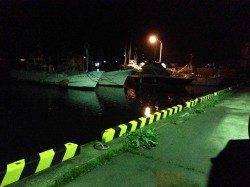 浦神湾でのナイトアジング、20㎝前後のアジ8匹
