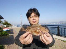 神戸空港RT、良型ガシラ釣れる
