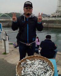 マリーナシティ海釣り公園、イワシ大漁 ♪