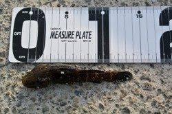 泉佐野食品コンビナートで探り釣り、17cmのメバルをゲット♪