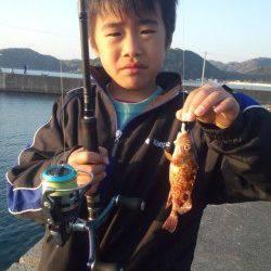 阿尾漁港でエギの合間に2gのジクヘッドでガシラGET