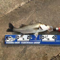 大阪南港でエビ撒き釣り、自己最高の64cmのスズキGET♪