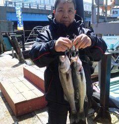 岸和田中波止でのハネ、ウキ釣りでの釣果