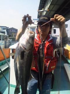 しらさでのウキ釣り 魚種多様に釣れています♪