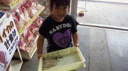 田辺湊浦漁港でお子様がキス7匹★