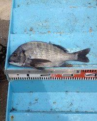 マリーナシティ海釣り公園 フカセ&紀州釣りでチヌ