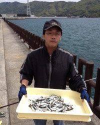 マリーナシティ海釣り公園、今日もサビキでイワシは大漁でした♪