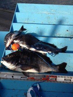 マリーナシティ海釣り公園 紀州釣りでチヌ4尾