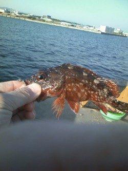 新竿テスト釣行 狙いの大アジと太刀魚は釣れませんでしたが…