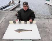 黒島の筏でマゴチが釣れました♪