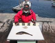 黒島の筏 シラサをエサにマゴチ48cm