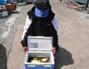 黒島の磯 ウキ釣りでアイゴ50匹
