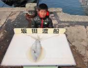 黒島の筏 ヤエンでアオリイカ1.6kg