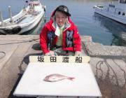 黒島の筏 シラサをエサにマダイ38cm