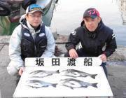 黒島の磯 フカセでチヌ〜41cm4匹