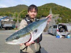 神谷一文字 のませ釣りでメジロ68cm