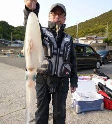 ウキ釣りでアオリイカ、よく釣れています!