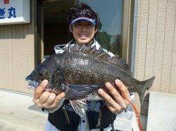湯浅の磯 フカセでグレ50.7cm(2.1kg)