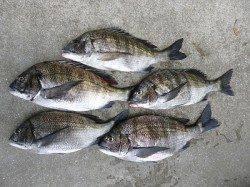 【23日】湯浅の磯で紀州釣り【チヌ】