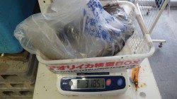 目津崎でエギング、アオリイカ3.1kg!!!