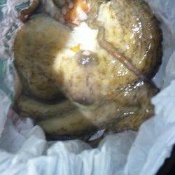 伊根湾内エギング調査、釣れたのは…食べ頃サイズのタコ