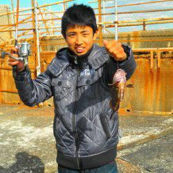 南港海釣り公園 ガシラ35匹の他ハネの釣果