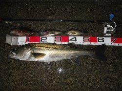 貝塚人工島へ夜釣りでエビ撒き釣りに行ってきました