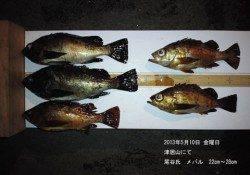 津居山で22㎝~28㎝のメバルの釣果♪